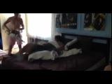 Как правильно разбудить друга :) #новые лучшие прикол самые смешное видео Фейлы fail коты девушки путин ржач новинки new 100500