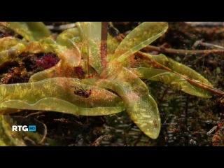 Заповедные острова Кандалакшского залива (фильм RTG)