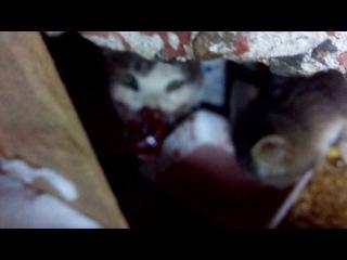 Добрым людям не смотреть.Ругательство для живодеров.Отравленная кошка.