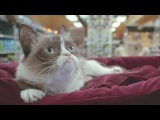 Худшее Рождество Сердитой кошки / Grumpy Cats Worst Christmas Ever (трейлер ENG)