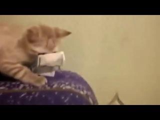 Даргинский кот