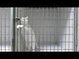 Этот кот — мастер побега. Этот кот живет в одной из ветеринарных клиник Марселя. И каждый раз ему удавалось выйти из клетки ночь