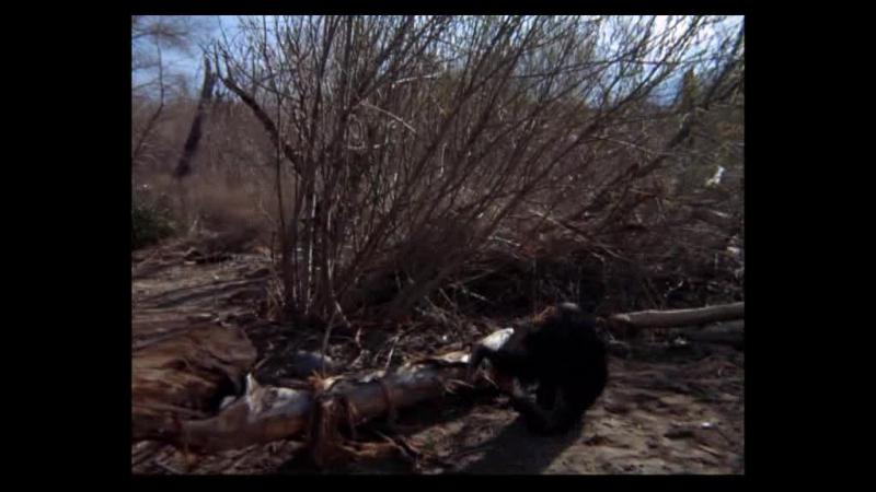 Дактари Daktari США 1966 1 сезон 9 серия