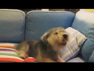 Как чихают животные