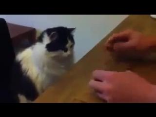 Кручу - верчу, кота запутать хочу