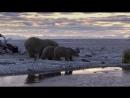 BBC Жизнь 3. Млекопитающие Life. Mammals (2009)