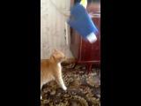 Мстительный кот. Кот - страшный зверь! Развязка в конце )