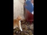 Не когда не доводите котов! Я чуть не умер со смеху! Лева беги! XD