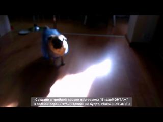 Кто до этого не знал, а Попова - живодёр)))