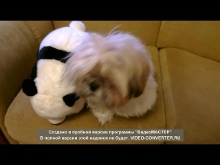 Приключения марлика и панды