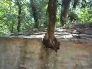 წმინდა თეოდორეს ტაძარი საბერძნეთში, რომელზეც 17 ხეა ამოსული და შიგნით ფესვები არცერთს