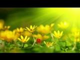 Для детей Караоке Песня  Пусть Всегда Будет Солнце
