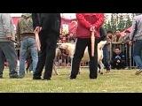 Собачьи бои чемпионат в Китае 2014 булли кута vs сао алабай