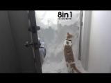 Кот пытается выбраться из дома и роет сугробы снега / A cat wants to go outside but prevents the snow
