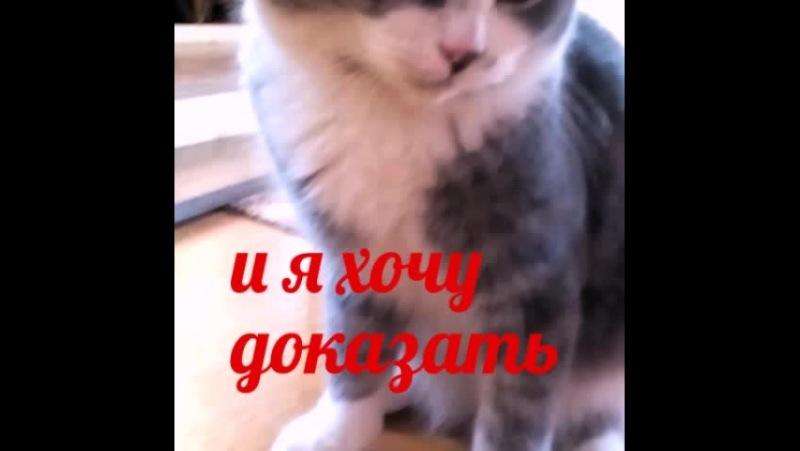 Вася Мягколапка Котам