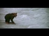 Медвежонок спасается от пумы !
