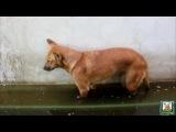Собака уснула в луже и упала