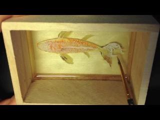 Создание трёхмерных золотых рыбок в прозрачной смоле / 3D goldfish paint in clear resins.