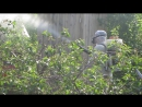Уничтожение комаров и клещей Обработка дачного участка от клопов и комаров