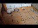 Котик ест руками ШОК ОЛЬГА БУЗОВА ПОРНО УБИЙСТВО КАННИБАЛЫ БЕСПЛАТНО БЕЗ СМС