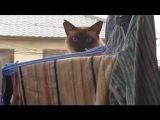 РЖАКА_ Неудачный паркур кота!