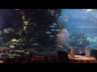 Подводный ресторан #AlMahara #BurjAlArab #Dubai #UAE