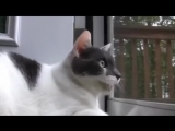 Кот пулемет