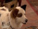 Собака точка ком - 1 сезон, 4 серия