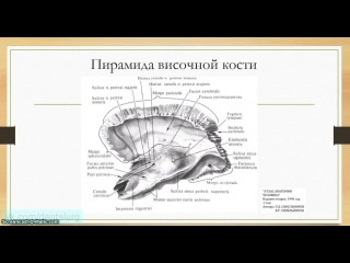 Анатомия человека - пирамида височной кости