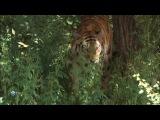 Мир живой природы VI (Чудеса природы) 5. Черно-белый боец. Африканская зебра