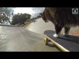WORLD'S BEST SKATEBOARDING CAT DIDGA! (6 sec)