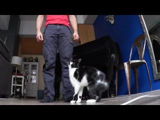 Самый нежный кот в мире!