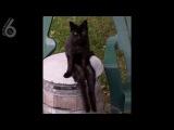 кот, как ты это делаешь (6 sec)