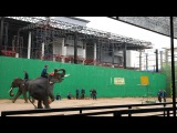 Побывал на шоу слонов. Я впечатлён. Запечатлил на видео, как слон-баскетболист выполняет удачный трёхочковый бросок