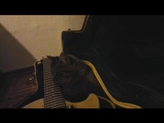 Кошка лижет струны