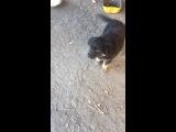 Мишка из УПК