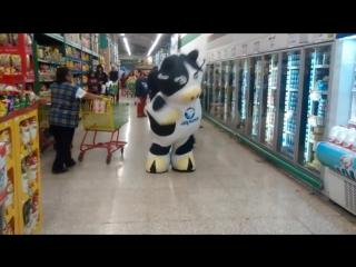 Vaca (alpura) - dançando (show das poderosas)