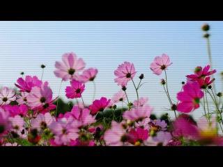 В Мире нет таких цветов , которые хоть бы капельку могли передать твою неописуемую , необыкновенную , неземную красоту , на небе