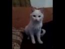 Говорящая кошка!!!