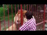 любовь животных к людям