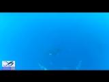Фридайвинг с Китами | Freediving With Whale