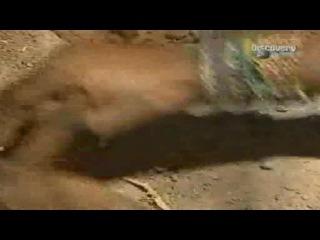 Искусство выживания Рэя Мирса - Намибия.