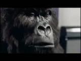Кинг-Конг играет на барабанах! Супер!!!