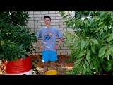 Timur DoctoR Ice Bucket Challenge