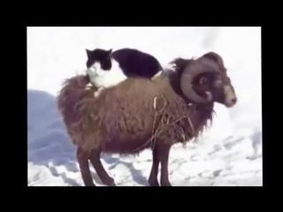 Приколы Ржач! Подборка Приколов и Неудач с людьми и животными!