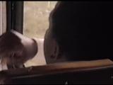 Садись В Автобус  Get On The Bus (1996)