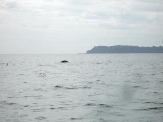 Погоня за дельфинами в Аравийском море