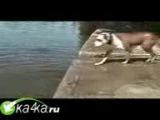 Glupen_kaya_sobachka