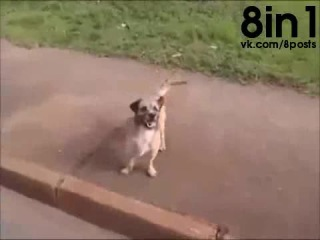 Собака пробежала за машиной скорой помощи с хозяином до самой больницы / Loyal Dog Chases Ambulance Rushing Owner To The Hospita