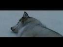 [Max] Клип по фильму Белый плен  Eight Below
